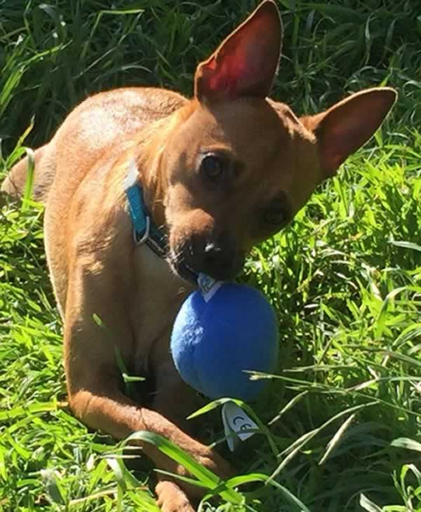 """<div class=""""meta image-caption""""><div class=""""origin-logo origin-image none""""><span>none</span></div><span class=""""caption-text"""">Meet Stevie! In honor of National Puppy Day, ABC7 is getting in the National Puppy Day spirit by featuring photos sent in by our viewers and our news team using #PuppiesOn7. (Photo submitted to KGO-TV by jsugarplum23/Twitter)</span></div>"""