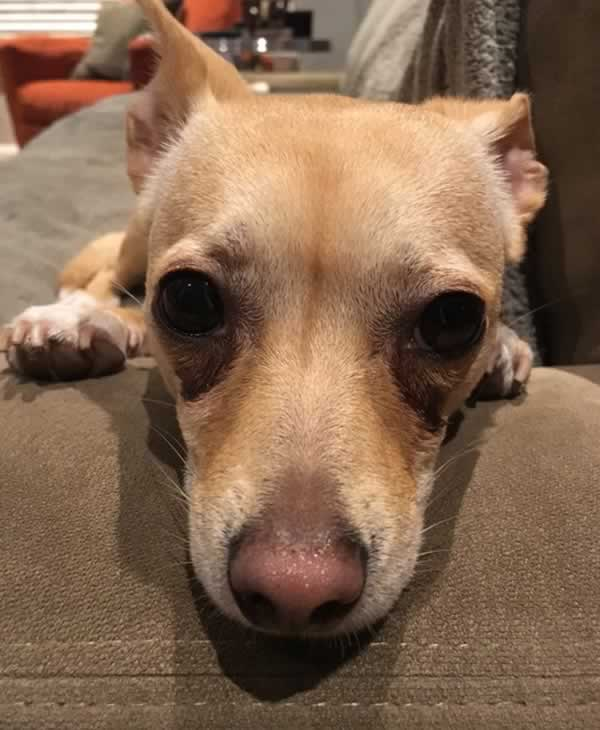 """<div class=""""meta image-caption""""><div class=""""origin-logo origin-image none""""><span>none</span></div><span class=""""caption-text"""">In honor of National Puppy Day, ABC7 is getting in the National Puppy Day spirit by featuring photos sent in by our viewers and our news team using #PuppiesOn7. (Photo submitted to KGO-TV by Ken Miguel)</span></div>"""