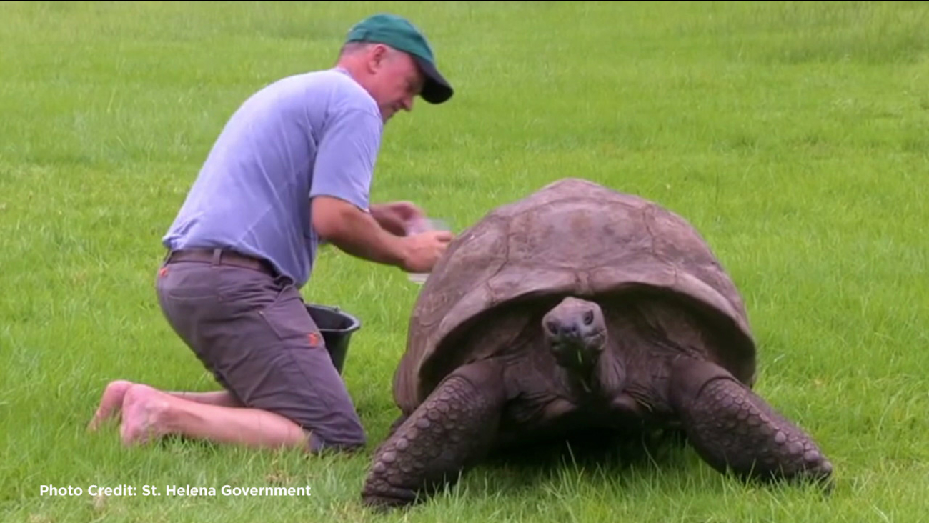 Jonathan the Giant Tortoise, the oldest living animal at 184 years old, was given his first bath.