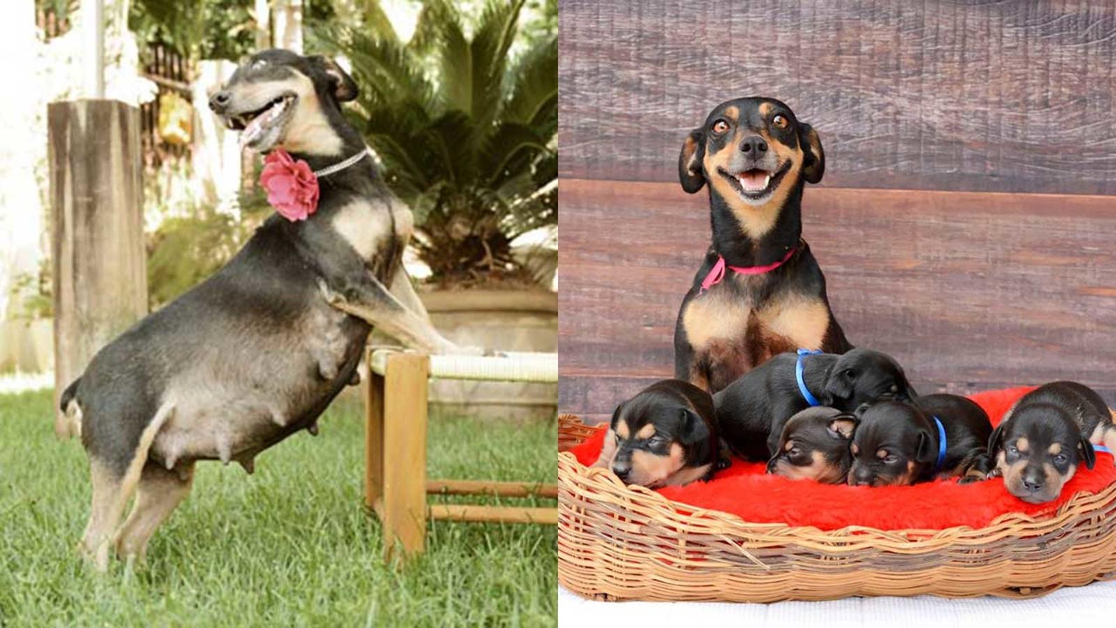как фотографировать щенков для продажи сможете пополнить свой