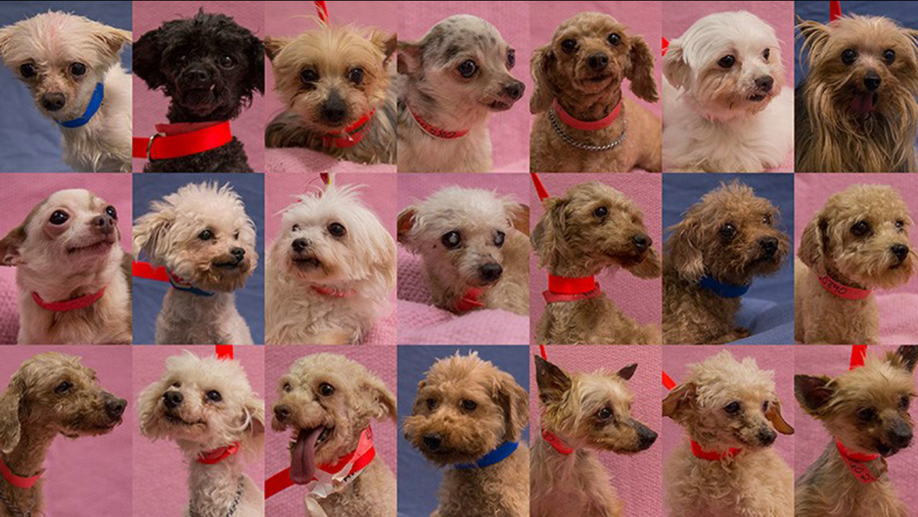The photos of 21 dogs left abandoned at the Moreno Valley Animal Shelter are shown above.
