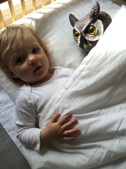 <div class='meta'><div class='origin-logo' data-origin='none'></div><span class='caption-text' data-credit='Rebecca'>Little girl and lawn owl are best friends</span></div>