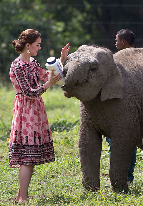 "<div class=""meta image-caption""><div class=""origin-logo origin-image ap""><span>AP</span></div><span class=""caption-text"">Kate feeds a baby elephant at at the Centre for Wildlife Rehabilitation and Conservation (CWRC) at Panbari reserve forest in northeastern Assam state, India on April 13, 2016. (Anupam Nath/Pool photo via AP)</span></div>"