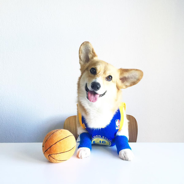 <div class='meta'><div class='origin-logo' data-origin='none'></div><span class='caption-text' data-credit='Photo submitted to KGO-TV by @chompersthecorgi/Instagram'>We want to see your fan pride Dub Nation, so tag your photos #DubsOn7 and we may feature them here or show them on TV.</span></div>