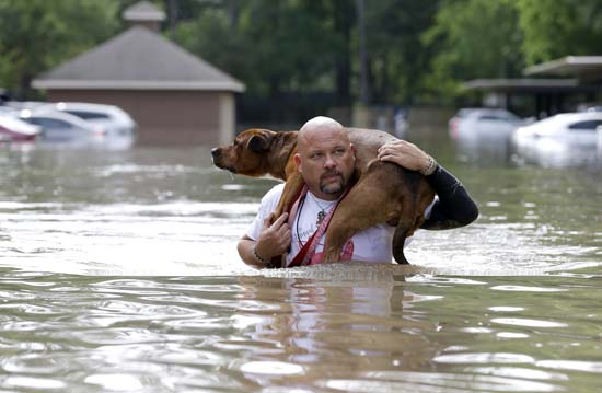 "<div class=""meta image-caption""><div class=""origin-logo origin-image ap""><span>AP</span></div><span class=""caption-text"">Louis Marquez carries his dog Dallas through floodwaters after rescuing the dog from his flooded apartment (AP Photo/David J. Phillip)</span></div>"