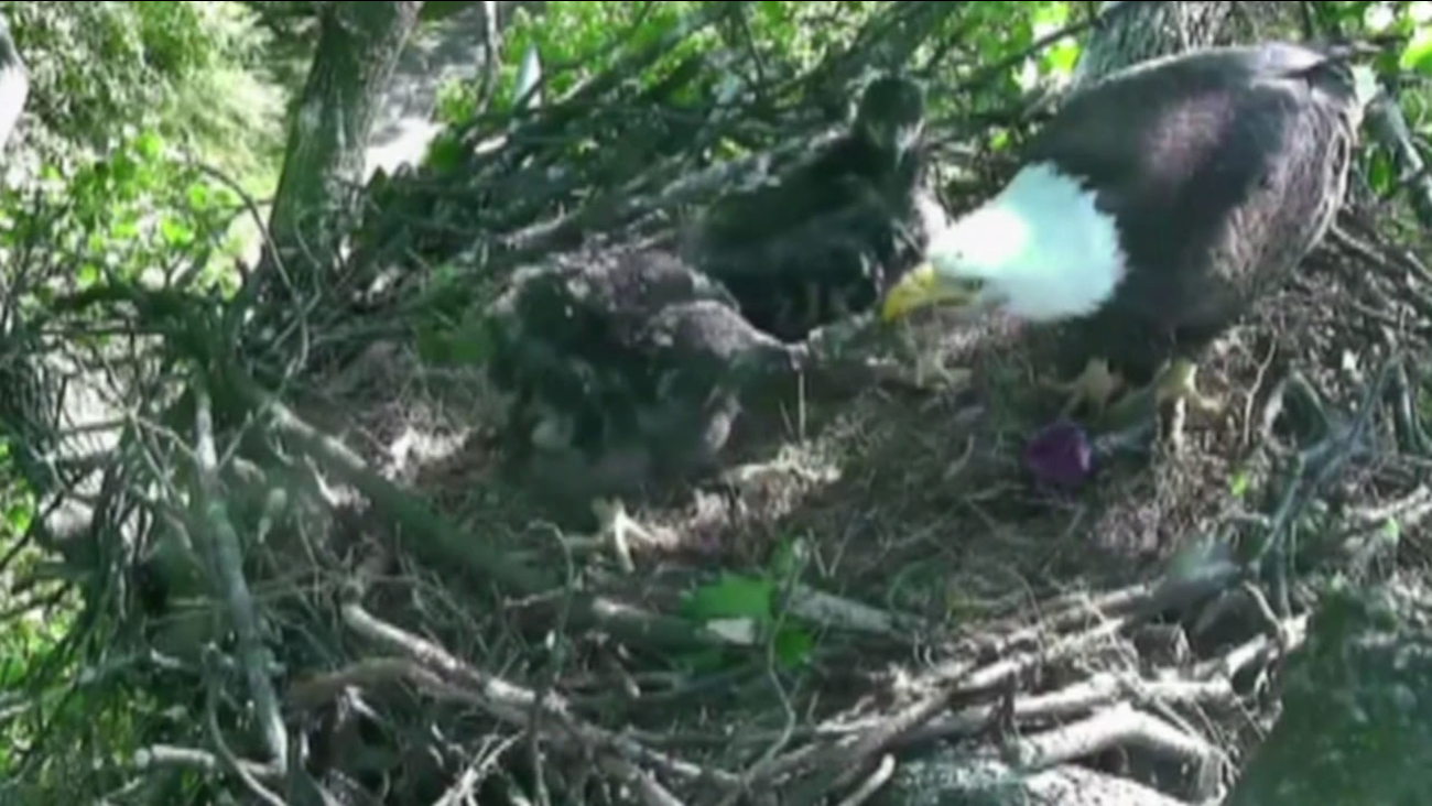 The winning names for the baby eagles are Freedom and Liberty.