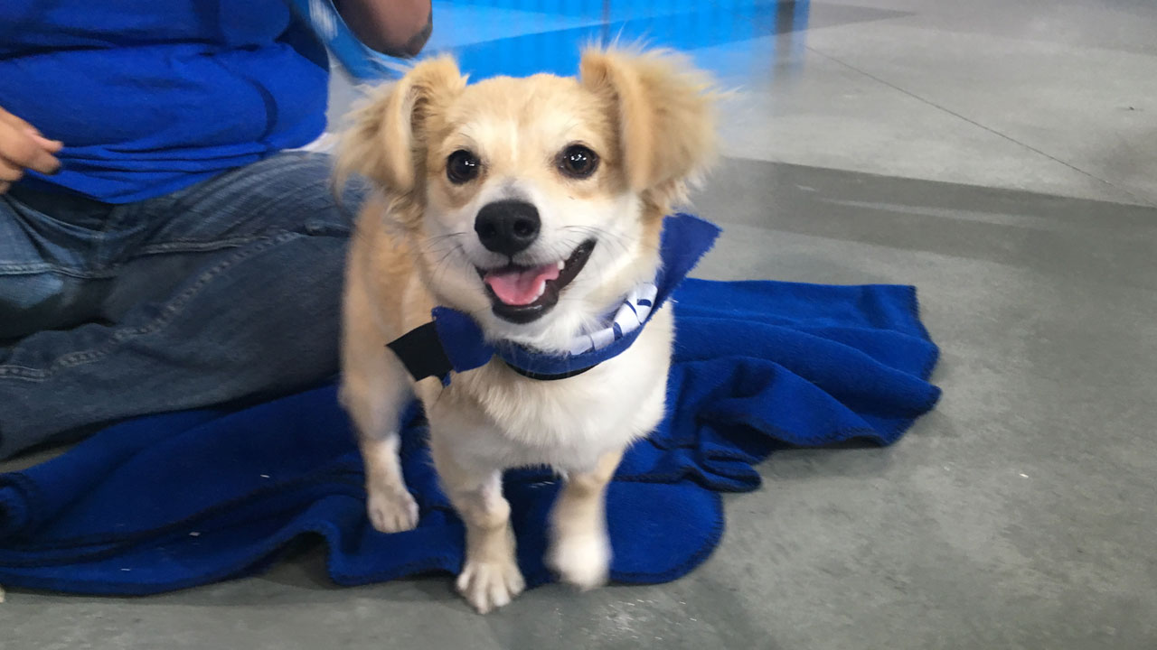 Justin, a 7-month-old Chihuahua and terrier mix, is shown in a photo on the ABC7 set above.
