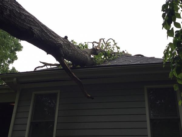 "<div class=""meta image-caption""><div class=""origin-logo origin-image wtvd""><span>WTVD</span></div><span class=""caption-text"">A tree damages a home in Cary. (ABC11 Eyewitness)</span></div>"