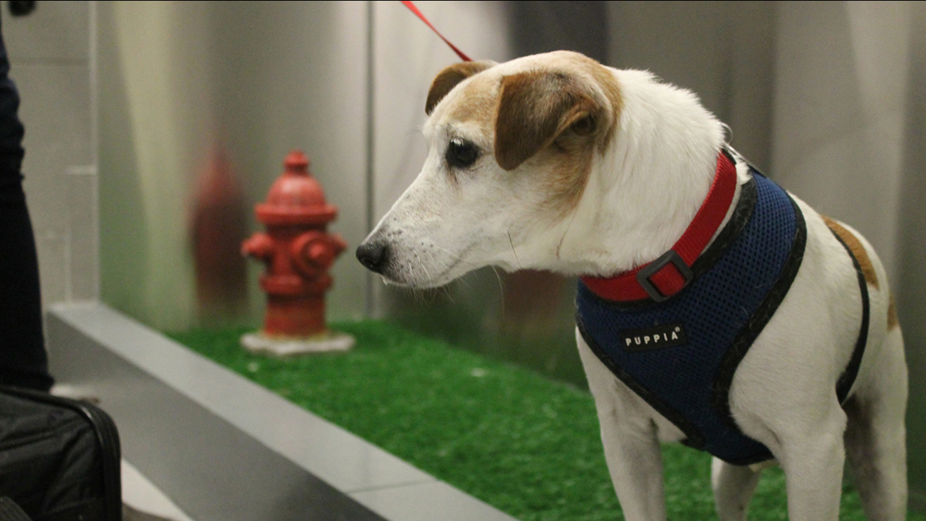 "A new ""pet relief"" area has opened in the international air terminal at JFK to help passengers taking their dogs on a long flight."