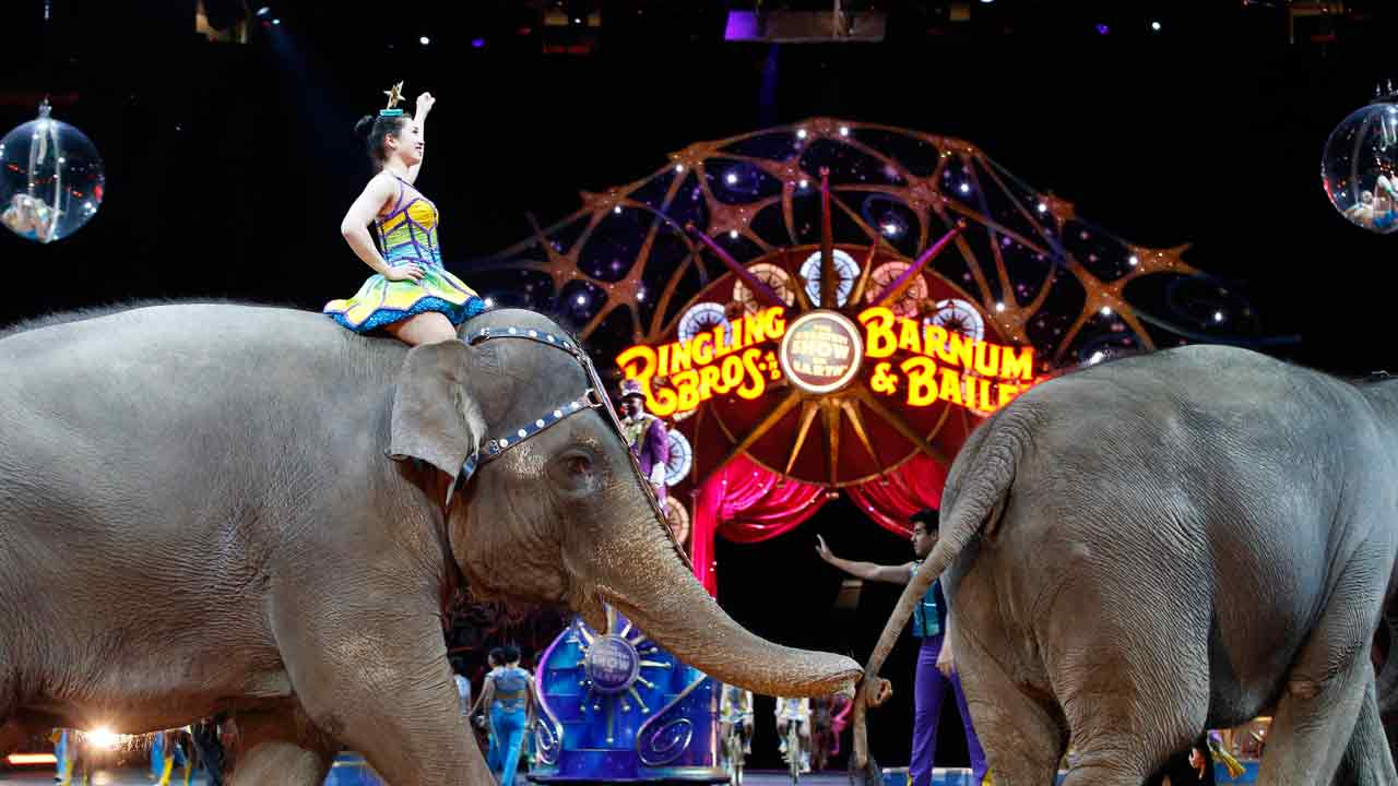 In this March 19, 2015, file photo, elephants walk during a performance of the Ringling Bros. and Barnum & Bailey Circus, in Washington.