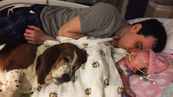 <div class='meta'><div class='origin-logo' data-origin='none'></div><span class='caption-text' data-credit='Mary Hall'>A family's two basset hounds refused to leave a dying child's side and stay with her until her final breath.</span></div>