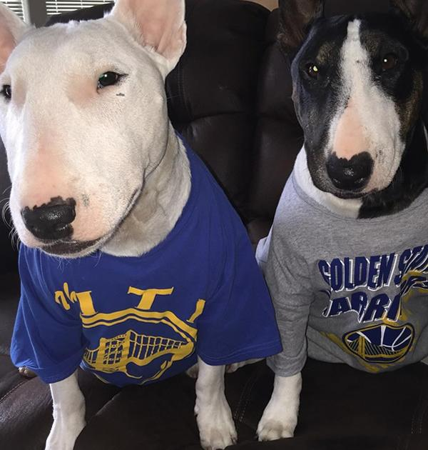 <div class='meta'><div class='origin-logo' data-origin='none'></div><span class='caption-text' data-credit='Photo submitted to KGO-TV by presley_bt/Instagram'>Check out these Warriors fans, ready to watch the game!</span></div>