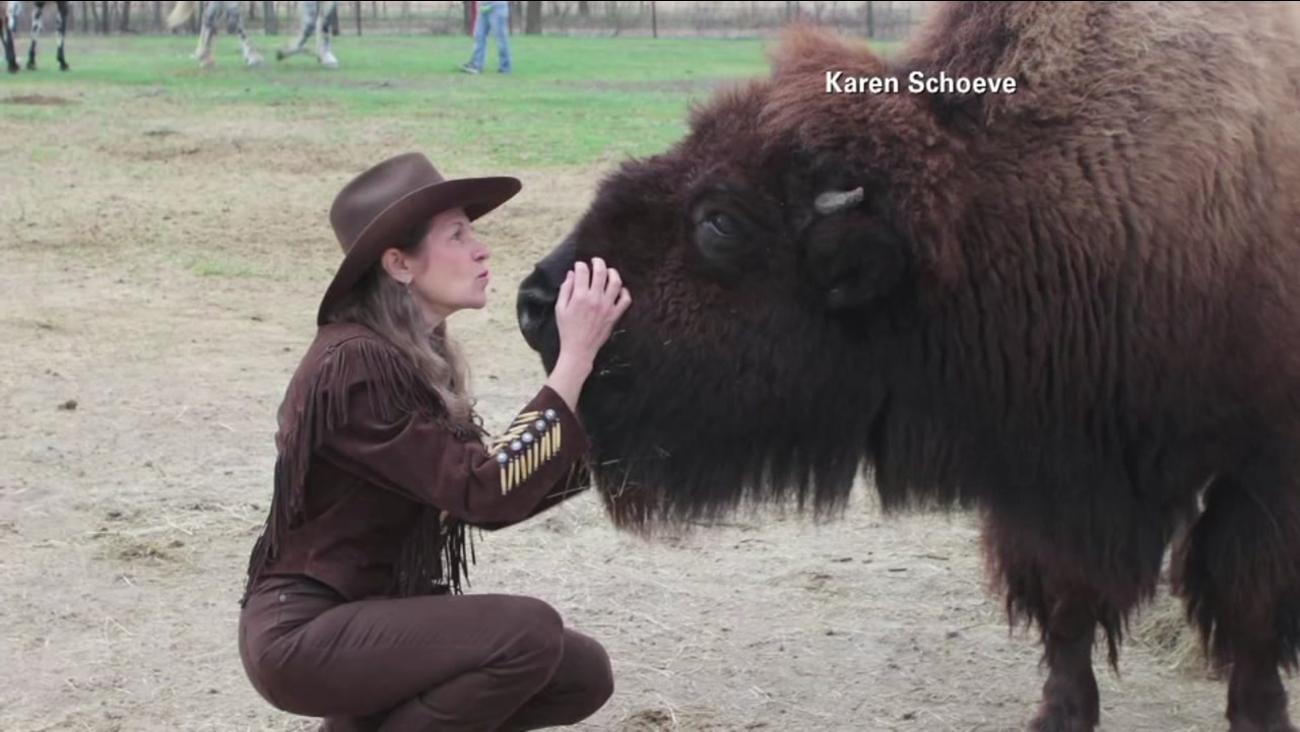 Buffalo adopted