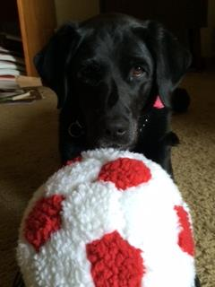 "<div class=""meta image-caption""><div class=""origin-logo origin-image ""><span></span></div><span class=""caption-text"">Guide dog Lorelle cheers for USA!  Keep sending in your World Cup fan photos! (photo submitted by Jan Robitscher via uReport)</span></div>"