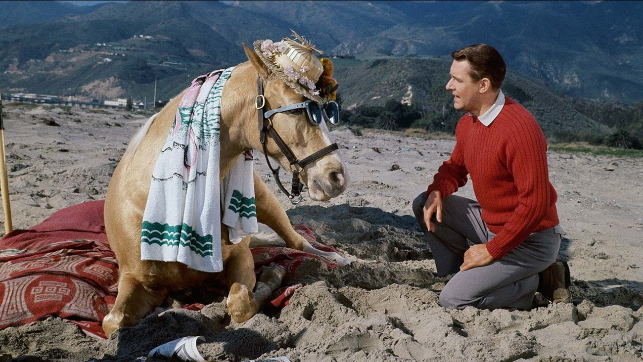 Mr. Ed visits a beach beatnik art colony with his TV friend, Alan Young, March 22, 1962.