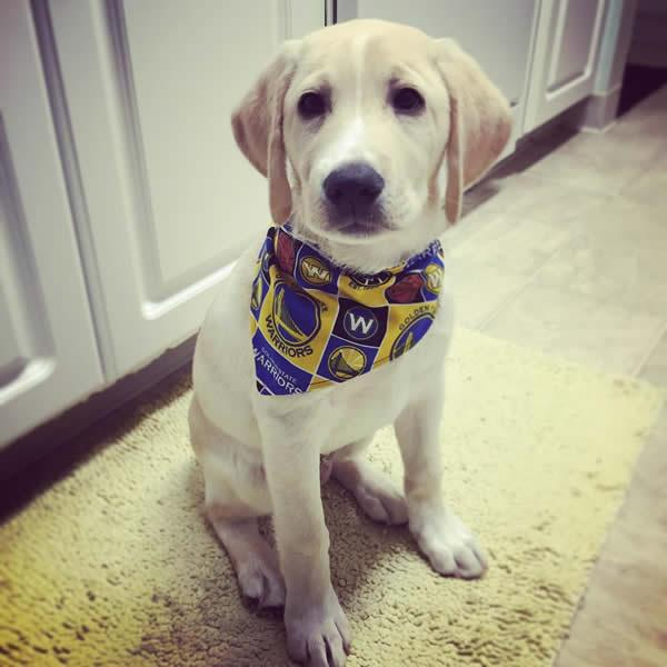 <div class='meta'><div class='origin-logo' data-origin='none'></div><span class='caption-text' data-credit='Photo submitted to KGO-TV by @otismeetsworld/Instagram'>We want to see your fan pride, so tag your photos #DubsOn7 and we feature them here or on TV.</span></div>