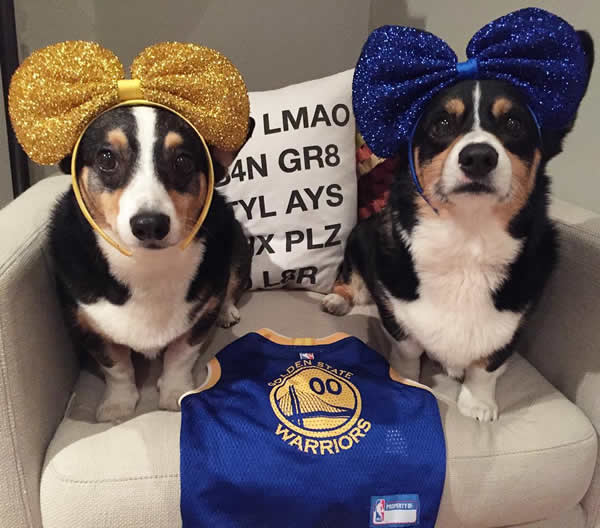 <div class='meta'><div class='origin-logo' data-origin='none'></div><span class='caption-text' data-credit='Photo submitted to KGO-TV by @corginista/Instagram'>We want to see your fan pride, so tag your photos #DubsOn7 and we may may feature them here or on TV.</span></div>
