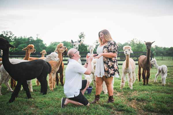 "<div class=""meta image-caption""><div class=""origin-logo origin-image none""><span>none</span></div><span class=""caption-text"">A herd of alpacas photobombed a couple's surprise engagement photo shoot at a farm in Tennessee over the weekend. (John Myers Photography)</span></div>"