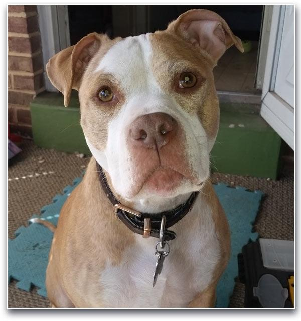 <div class='meta'><div class='origin-logo' data-origin='WPVI'></div><span class='caption-text' data-credit=''>There's an urgent call for help to find a missing dog in Delaware that belongs to a military member serving overseas.</span></div>