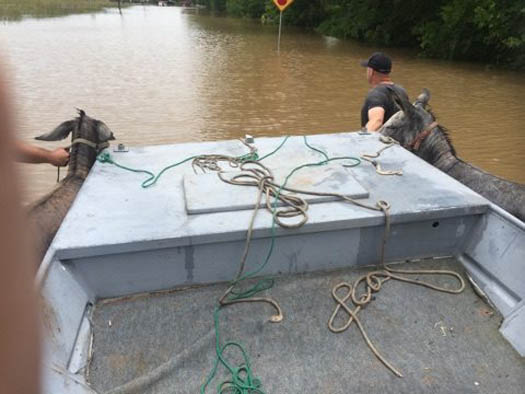 "<div class=""meta image-caption""><div class=""origin-logo origin-image none""><span>none</span></div><span class=""caption-text"">Animal rescues in Holiday Lakes, Sunday, June 5.</span></div>"