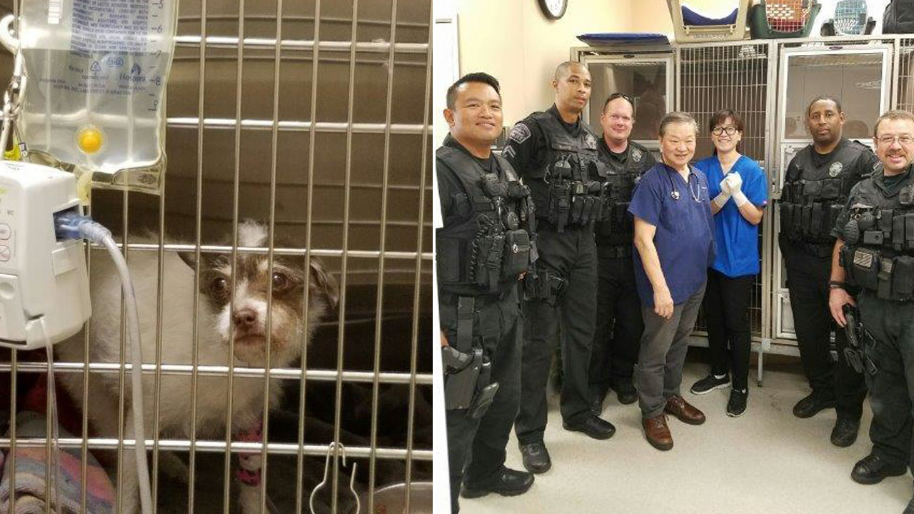 Los Angeles airport K-9 officers take a photo with Westchester Veterinarian Center staff who helped save Roxy's life.