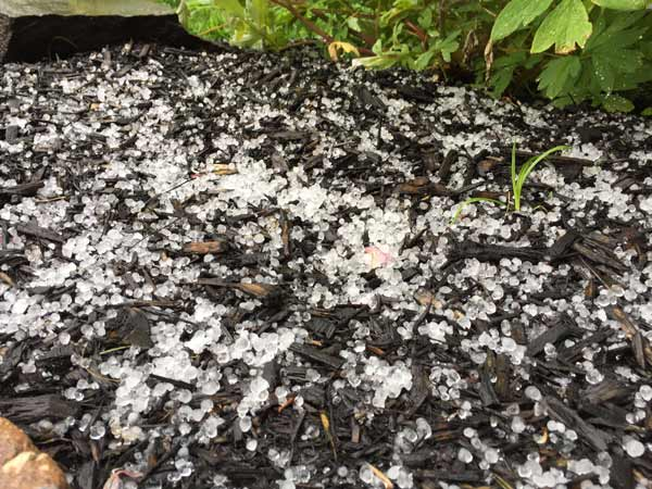 "<div class=""meta image-caption""><div class=""origin-logo origin-image wpvi""><span>WPVI</span></div><span class=""caption-text"">Action News viewer Kristen Lynn Lucas sent in this photo of hail from New Britain Township, Pa.</span></div>"