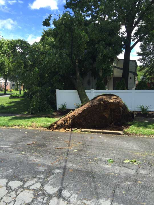 "<div class=""meta image-caption""><div class=""origin-logo origin-image none""><span>none</span></div><span class=""caption-text"">Action News viewer Angel Reyes sent in this photo of a downed tree on Bellows Lane in Cherry Hill, New Jersey.</span></div>"