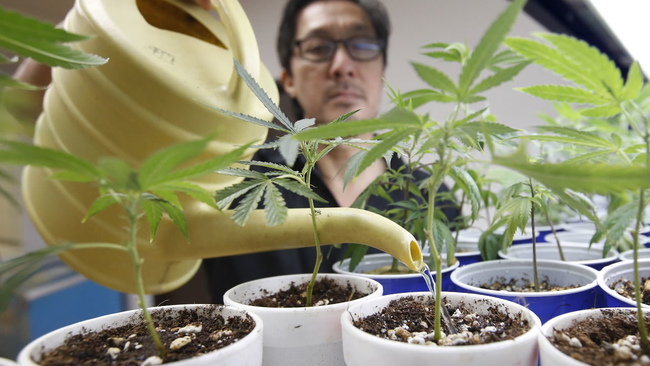 San Jose Votes To Allow Medical Marijuana Dispensaries To Deliver