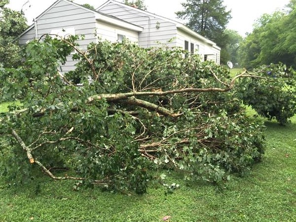 """<div class=""""meta image-caption""""><div class=""""origin-logo origin-image wtvd""""><span>WTVD</span></div><span class=""""caption-text"""">A tree falls on a house in Kittrell. (ABC11 Eyewitness)</span></div>"""
