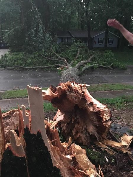 "<div class=""meta image-caption""><div class=""origin-logo origin-image wtvd""><span>WTVD</span></div><span class=""caption-text"">An oak tree came crashing down. (ABC11 Eyewitness)</span></div>"