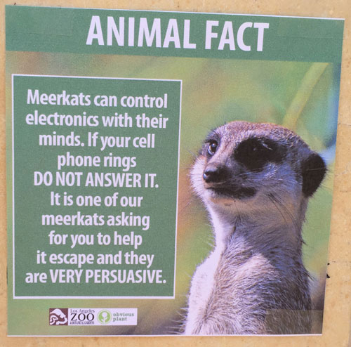 "<div class=""meta image-caption""><div class=""origin-logo origin-image none""><span>none</span></div><span class=""caption-text"">A poster shows a fake fact about meerkats at the Los Angeles Zoo. (Photo courtesy Jeff Wysaski)</span></div>"