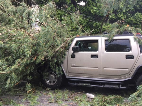 "<div class=""meta image-caption""><div class=""origin-logo origin-image wpvi""><span>WPVI</span></div><span class=""caption-text"">A tree fell on a vehicle on McKennans Church Road in Wilmington, Delaware.</span></div>"