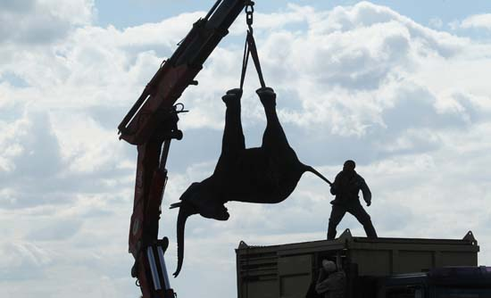 "<div class=""meta image-caption""><div class=""origin-logo origin-image ap""><span>AP</span></div><span class=""caption-text"">An elephant is lifted by a crane in an upside down position in Lilongwe, Malawi (AP Photo/Tsvangirayi Mukwazhi)</span></div>"