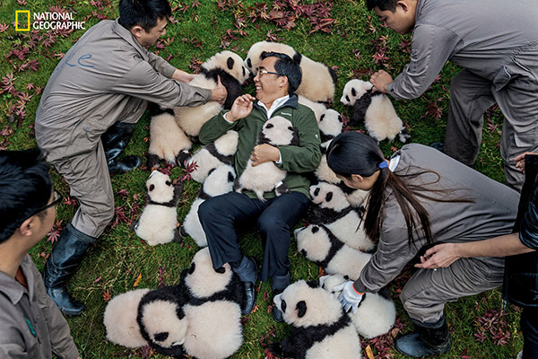 "<div class=""meta image-caption""><div class=""origin-logo origin-image wpvi""><span>wpvi</span></div><span class=""caption-text"">Zhang Hemin-""Papa Panda"" to his staff-poses with cubs born in 2015 at Bifengxia Panda Base. (© Ami Vitale / National Geographic)</span></div>"