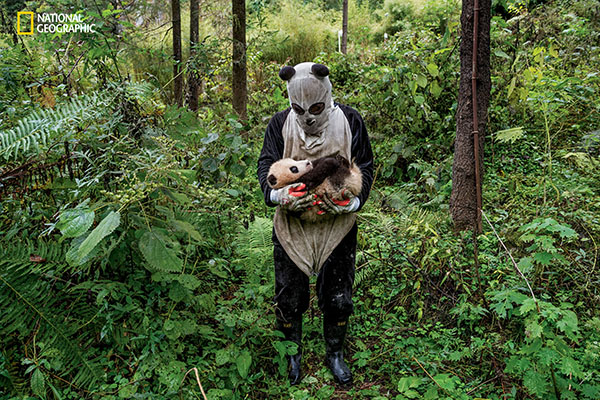 "<div class=""meta image-caption""><div class=""origin-logo origin-image wpvi""><span>wpvi</span></div><span class=""caption-text"">Caretakers for the pandas have to wear costumes scented with panda urine so the animals won't get used to humans. (© Ami Vitale / National Geographic)</span></div>"