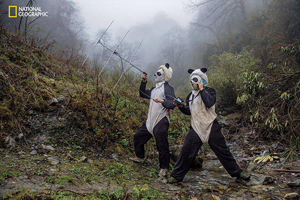 "<div class=""meta image-caption""><div class=""origin-logo origin-image wpvi""><span>wpvi</span></div><span class=""caption-text"">In a large forested enclosure of the Wolong Reserve, panda keepers Ma Li and Liu Xiaoqiang listen for radio signals from a collared panda training to be released to the wild. (© Ami Vitale / National Geographic)</span></div>"