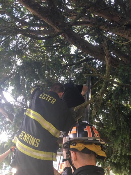 "<div class=""meta image-caption""><div class=""origin-logo origin-image none""><span>none</span></div><span class=""caption-text"">Authorities say a New Jersey woman trying to catch Pokemon in a cemetery ended up stuck in a tree and had to call 911 to rescue her. (East Greenwich Township Fire & Rescue)</span></div>"