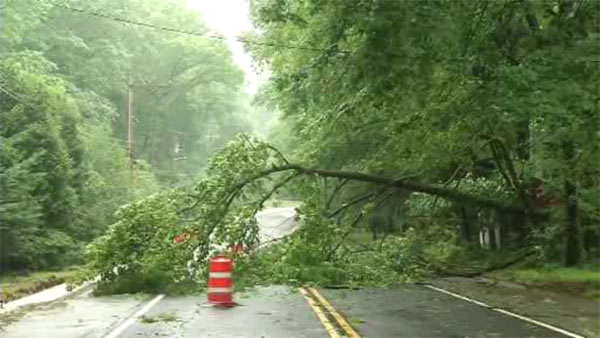 Storm knocks down trees in Wilmington
