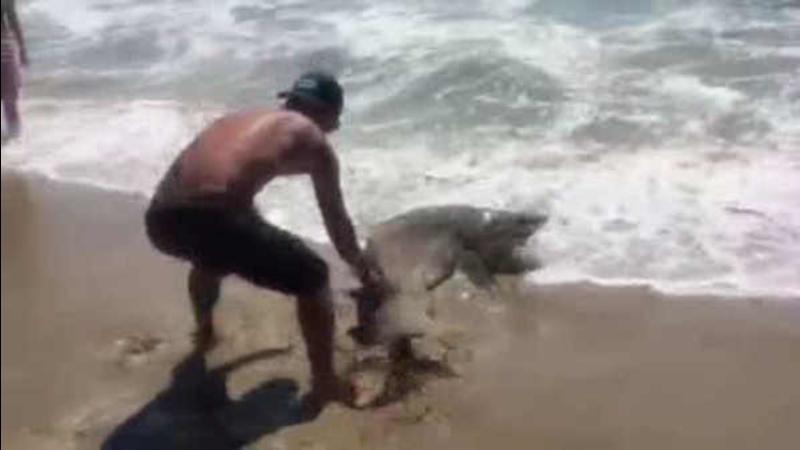 Reels In Shark On Nj Beach