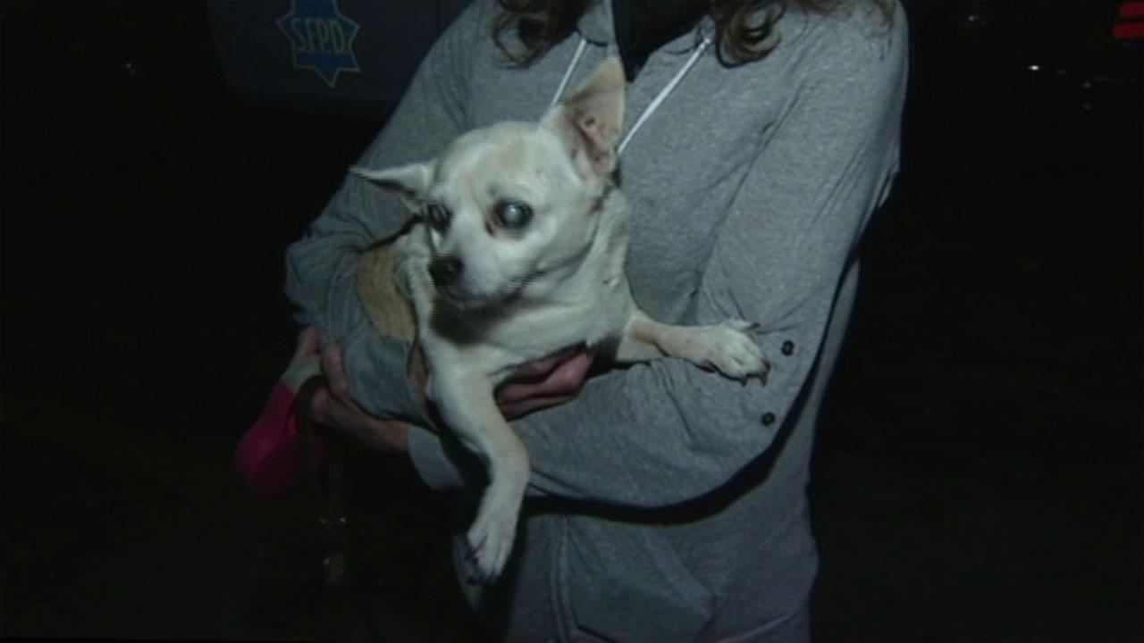 Tiny the dog was rescued after falling through a hole in the sidewalk in San Francisco.
