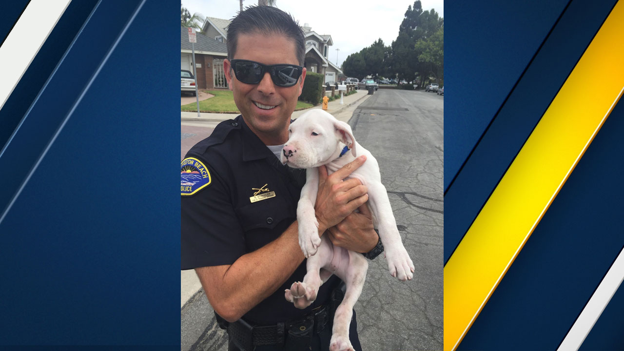 A Huntington Beach police officer holds up a puppy that was rescued from drowning in a pool on Tuesday, Aug. 9, 2016.