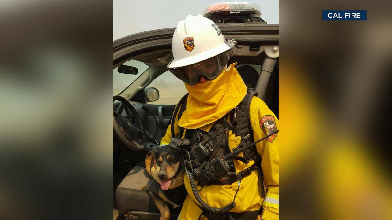 Cal FireBattalion Chief Mike Mohler holds a dog he rescued from the Blue Fire in the West Cajon Valley area.