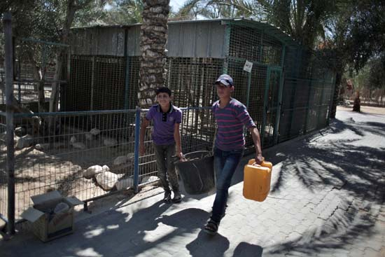 "<div class=""meta image-caption""><div class=""origin-logo origin-image ap""><span>AP</span></div><span class=""caption-text"">Two Palestinian workers clean the zoo in Khan Younis, southern Gaza Strip (AP Photo/ Khalil Hamra)</span></div>"