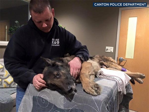 Jethro, a K-9 for the Canton Police Department in Ohio, is seen in a photo released by the department.