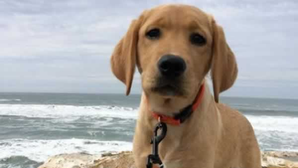"""<div class=""""meta image-caption""""><div class=""""origin-logo origin-image none""""><span>none</span></div><span class=""""caption-text"""">In honor of National Dog Day, ABC7 viewers are sharing pictures of their furry friends! Show us your pooch by tagging pics #abc7now! (Photo submitted to KGO-TV by Tim Hendrickson/Facebook)</span></div>"""
