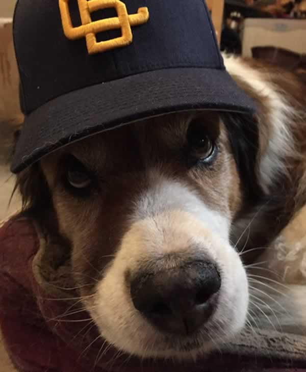 """<div class=""""meta image-caption""""><div class=""""origin-logo origin-image none""""><span>none</span></div><span class=""""caption-text"""">In honor of National Dog Day, ABC7 viewers are sharing pictures of their furry friends! Show us your pooch by tagging pics #abc7now! (Photo submitted to KGO-TV by BrianUtt/Twitter)</span></div>"""