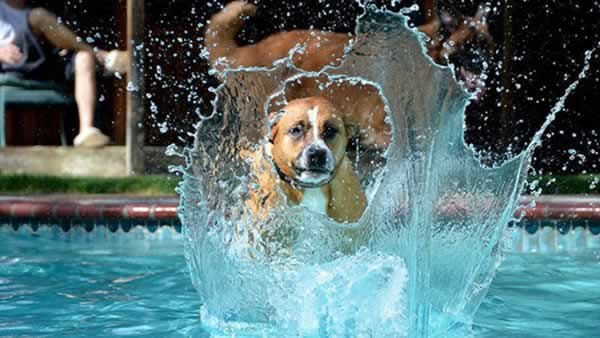 """<div class=""""meta image-caption""""><div class=""""origin-logo origin-image none""""><span>none</span></div><span class=""""caption-text"""">In honor of National Dog Day, ABC7 viewers are sharing pictures of their furry friends! Show us your pooch by tagging pics #abc7now! (Photo submitted to KGO-TV by Jeanine Shipilov/Facebook)</span></div>"""