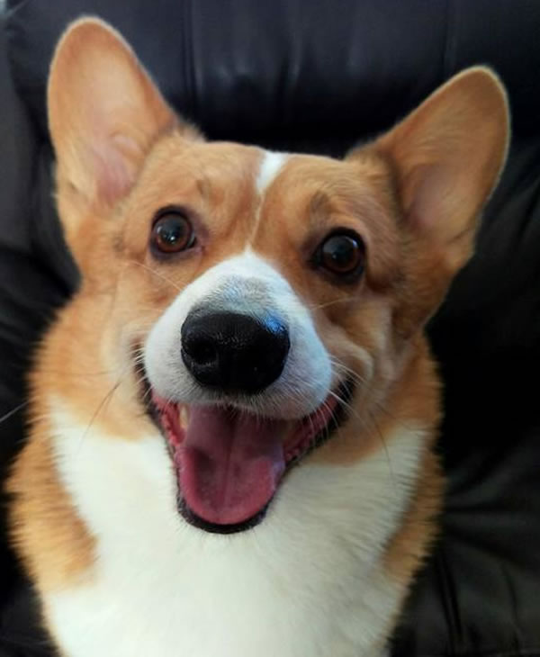 """<div class=""""meta image-caption""""><div class=""""origin-logo origin-image none""""><span>none</span></div><span class=""""caption-text"""">In honor of National Dog Day, ABC7 viewers are sharing pictures of their furry friends! Show us your pooch by tagging pics #abc7now! (Photo submitted to KGO-TV by JP Laranang/Gacebook)</span></div>"""