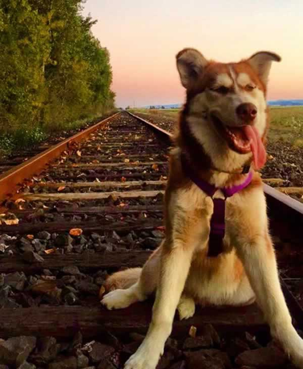 """<div class=""""meta image-caption""""><div class=""""origin-logo origin-image none""""><span>none</span></div><span class=""""caption-text"""">In honor of National Dog Day, ABC7 viewers are sharing pictures of their furry friends! Show us your pooch by tagging pics #abc7now! (Photo submitted to KGO-TV by Pitah Mendez/Facebook)</span></div>"""
