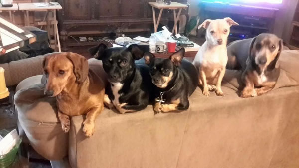 """<div class=""""meta image-caption""""><div class=""""origin-logo origin-image none""""><span>none</span></div><span class=""""caption-text"""">In honor of National Dog Day, ABC7 viewers are sharing pictures of their furry friends! Show us your pooch by tagging pics #abc7now! (Photo submitted to KGO-TV by Sara Hurst/Facebook)</span></div>"""
